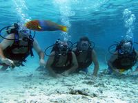 You are guaranteed to see tropical fish and local marine life on this Marine Reserve